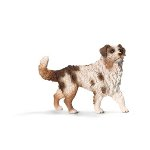 16392 - Australian Shepherd, female